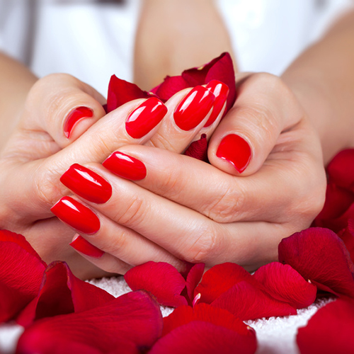 Red manicure on a woman hands with leafs of roses.